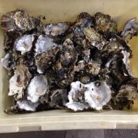 ◆牡蠣の殻を肥料に・・