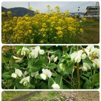 芸西村の春♪