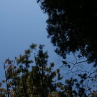 茨城県大子町、近津神社の鉾スギと都々母杉です!!