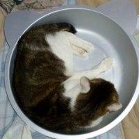 ひんやり猫鍋買ってもらったのに