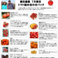 7月限定 トマト詰め合わせパック