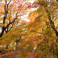 紅葉回廊~河口湖②