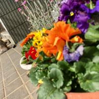 春めく庭で