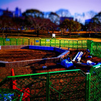 午前中、将棋番組を視聴→地元の公園で、工事中の遊具を