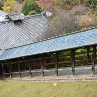 奈良公園の紅葉・・・7