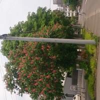 マロニエ並木