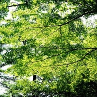 武蔵野公園の緑を眺めて その2