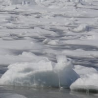 流氷、いまだ停滞中