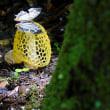 珍菌と南方系蝶