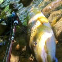 茶色い鱒を釣る