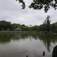 大賀蓮 千葉公園