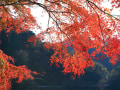 丹沢湖の紅葉2