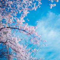 春を喜べなくても。