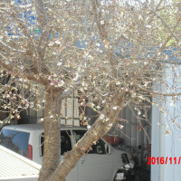 今日の景色桜咲いてる