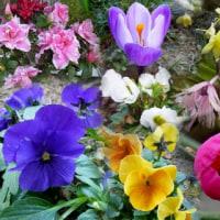 春の花で「コラージュ」二つ