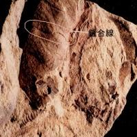 七田清さんの化石教室 その8