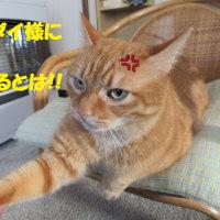 ダイちゃん日和高くつくニャヽ(`Д´)ノプンプン