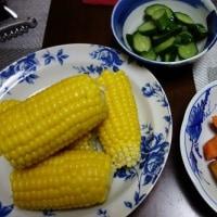 採れたてのトウモロコシがおいしい!