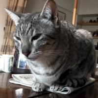猫と新聞のバトル