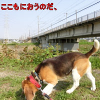 新幹線から3メートルの散歩道
