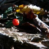 万寿山(10/18、果実など)