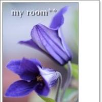 二番花が、、イロイロ咲いて、、。