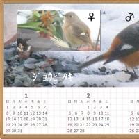 3か月 カレンダー ジョウビタキ