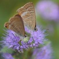 蝶が舞う秋