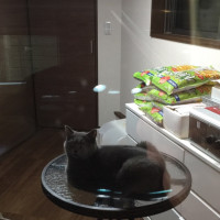 外から窓越しに見る猫が可愛い