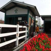 京都競馬場と園田競馬場へ遠征