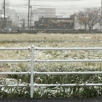 雪ですが、オープンしています