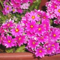 春ですね(散歩道の花々)