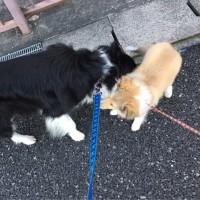 昨日、今日のお散歩で出会った元気でかわいいお友だち♪