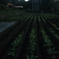 管理二本松農園