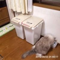 オシャレ ゴミ箱 ダストボックス 45L 送料無料