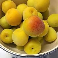 梅しごと2017(つづき)