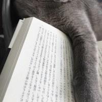 読書にゃよ