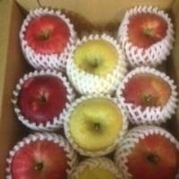 赤や黄色の信州りんご
