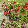 淡路景観園芸学校の花
