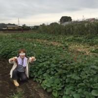 今日は、芋掘り・・・