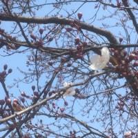 長居公園に春を探して