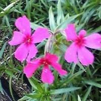 菜園の隅に咲く冬の草花