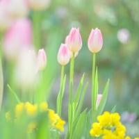 花と妖精_160417