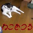 竿じゃらしで釣れる猫・釣れない猫【猫日記こむぎ&だいず】2017.07.19