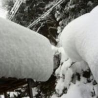 雪にすっぽり!