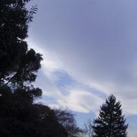 優雅な白いのと可愛い黒いのと🎵&流れる雲。