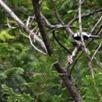 シジュウカラが枯れ枝に飛んできた