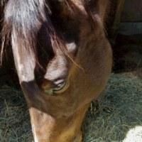 馬の仕事につくために アニベジ奮闘記 エピソード243