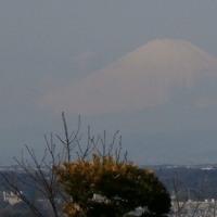 3月の円海山ハイク(2017年)