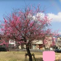 小春日和のウォーク